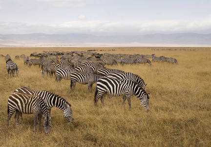 African Safari Scenes 102 02