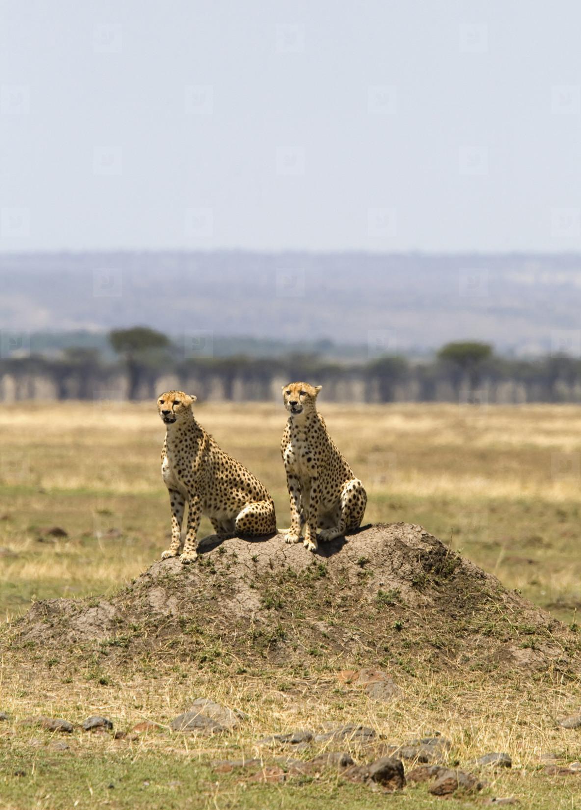 African Safari Scenes 102  03