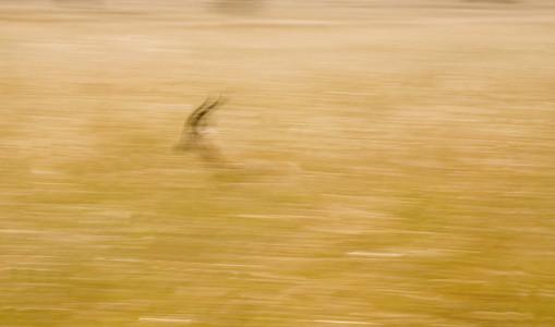 African Safari Scenes 102 04