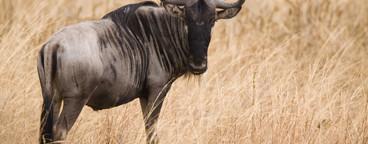 African Safari Scenes 102  05