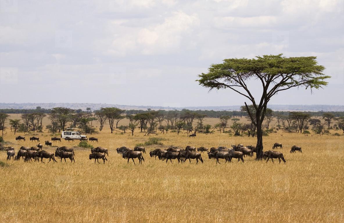 African Safari Scenes 102  06