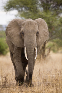 African Safari Scenes 102 07