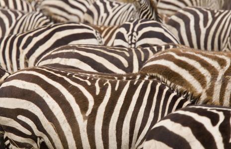 African Safari Scenes 102 08
