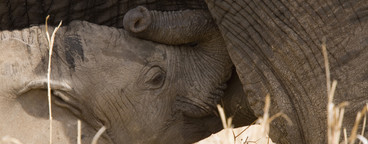 African Safari Scenes 102  11