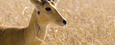 African Safari Scenes 102  12