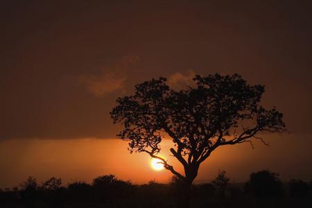African Safari Scenes 102 13