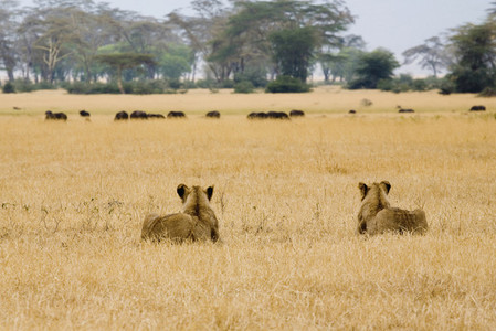 African Safari Scenes 102 14