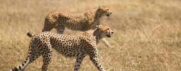 African Safari Scenes 102  16
