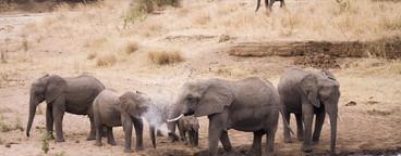 African Safari Scenes 102  17