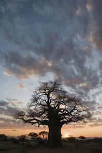African Safari Scenes 102 19