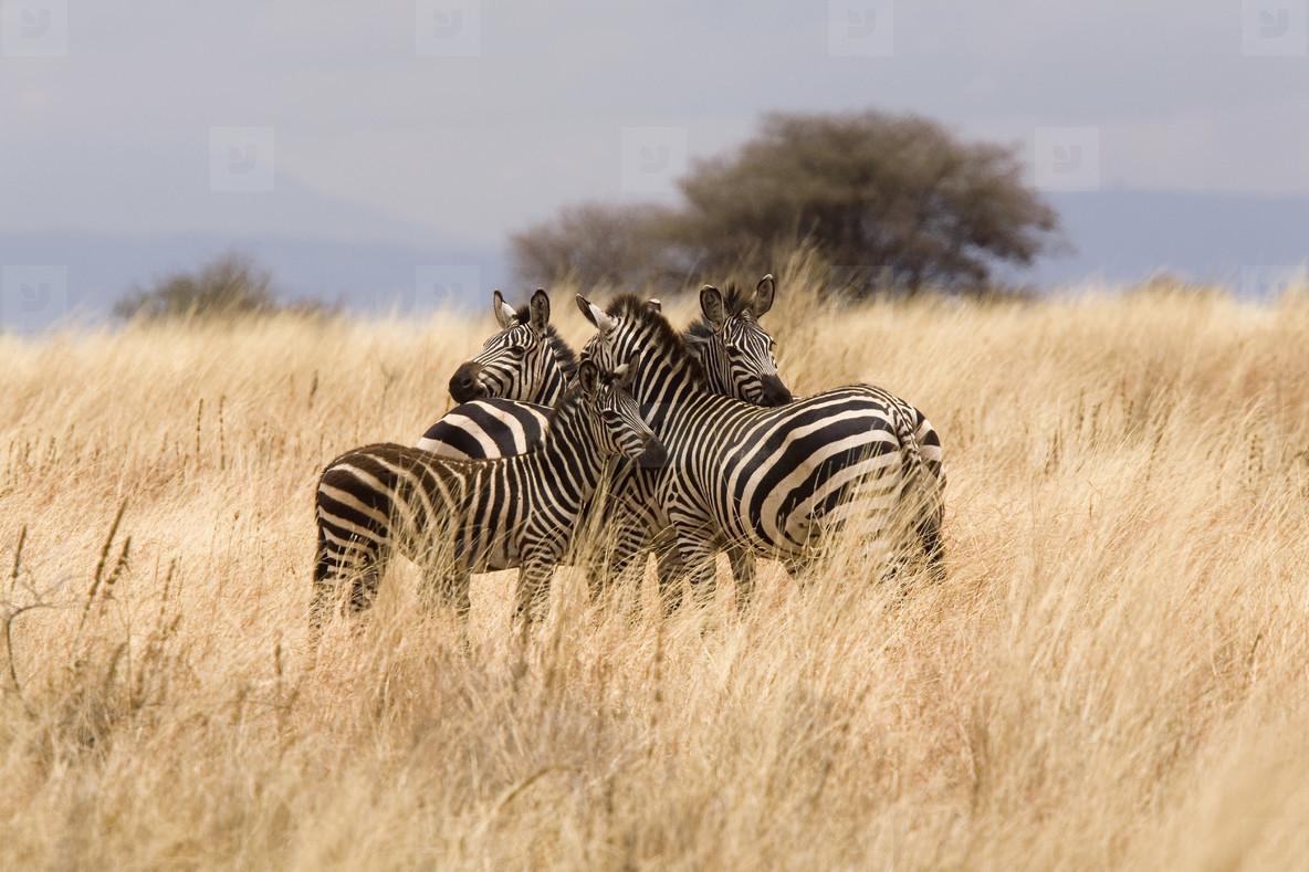 African Safari Scenes 102  21