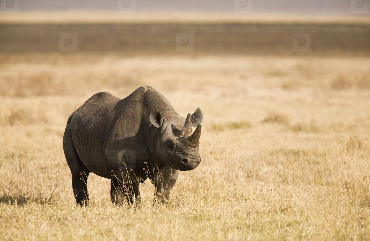 African Safari Scenes 102  22