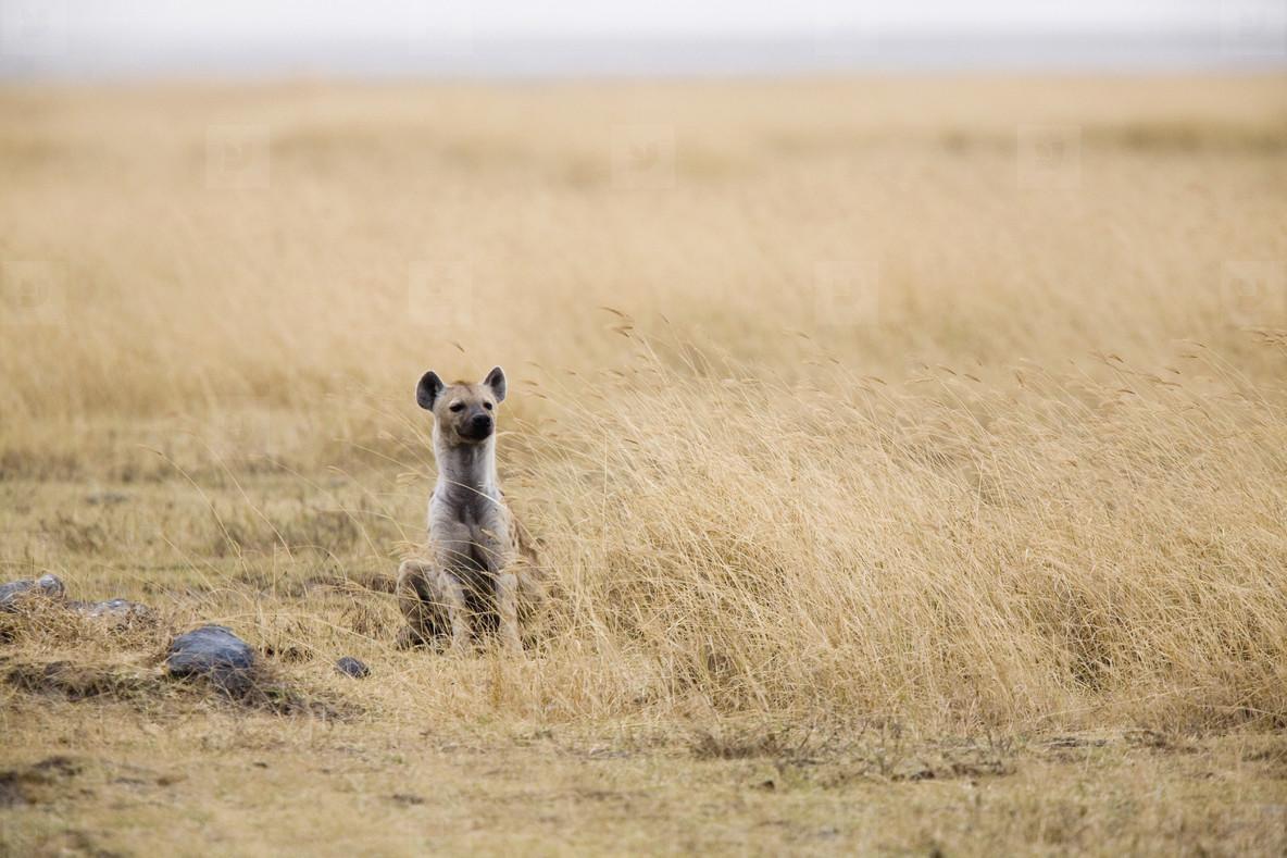 African Safari Scenes 102  23