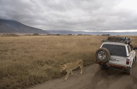 African Safari Scenes 102 24