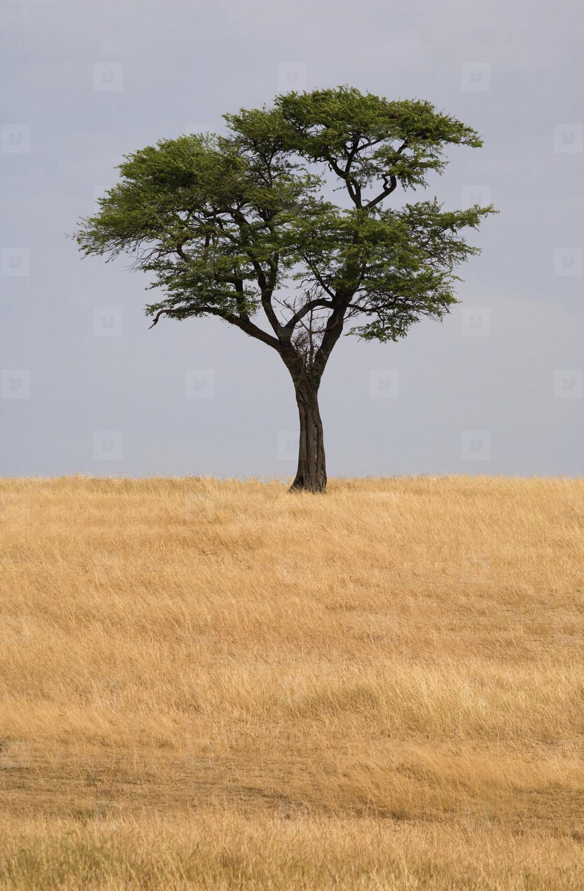 African Safari Scenes 102  25