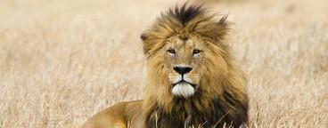 African Safari Scenes 102  26