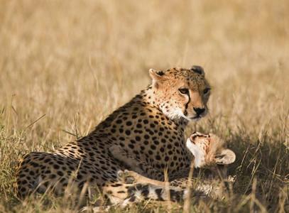 African Safari Scenes 102  31
