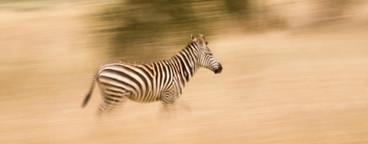 African Safari Scenes 102  32