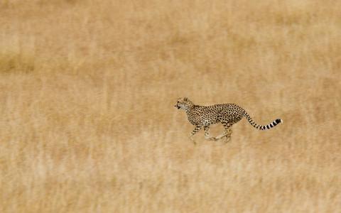African Safari Scenes 102 34