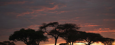 African Safari Scenes 102  35