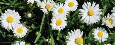 Flowered and Sprayed  23