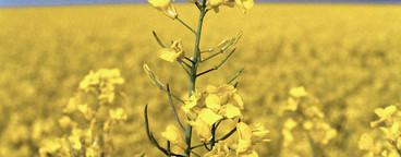 Flowered and Sprayed  32