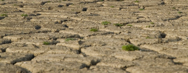 Parched Earth  04
