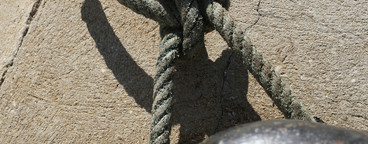 Succulent Sea Critters  03