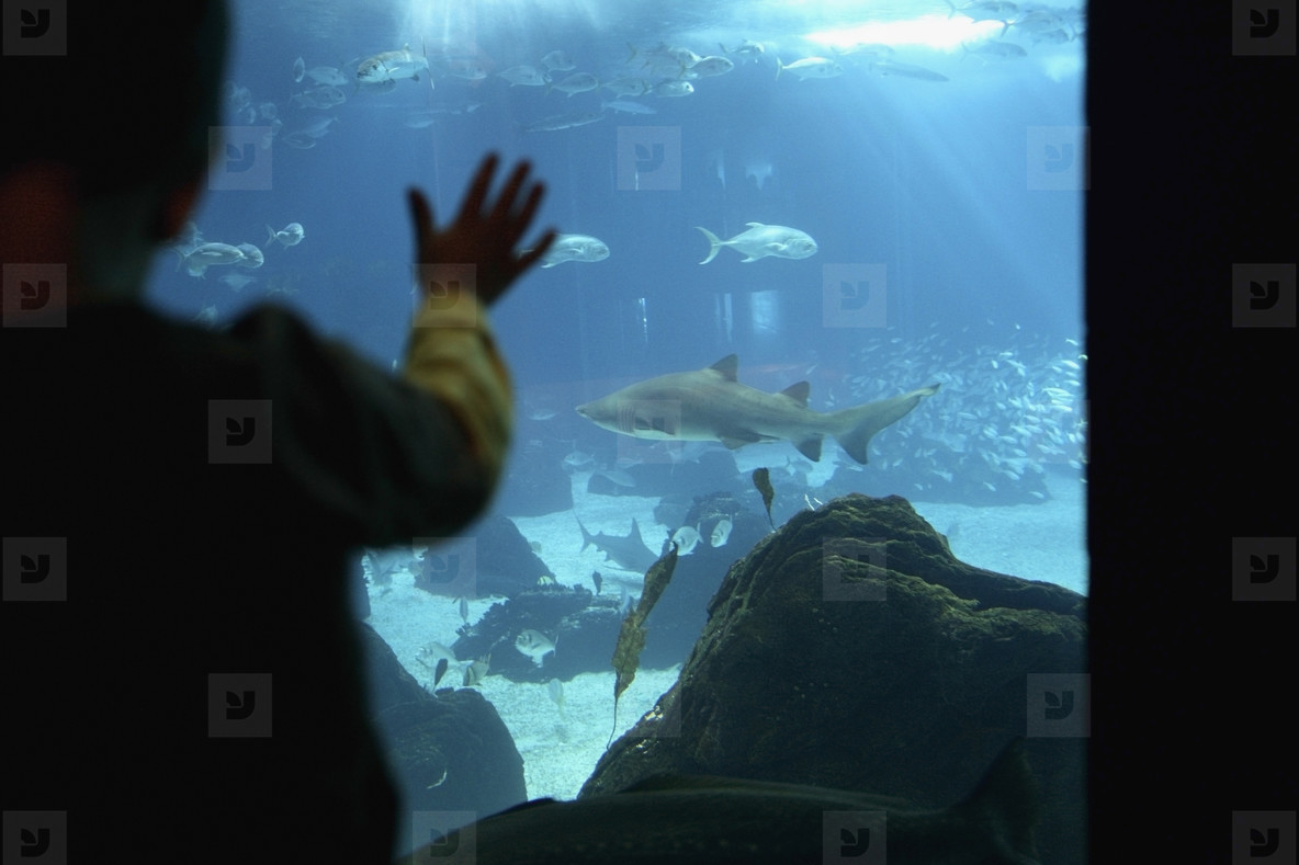 Succulent Sea Critters  04