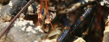 Succulent Sea Critters  09