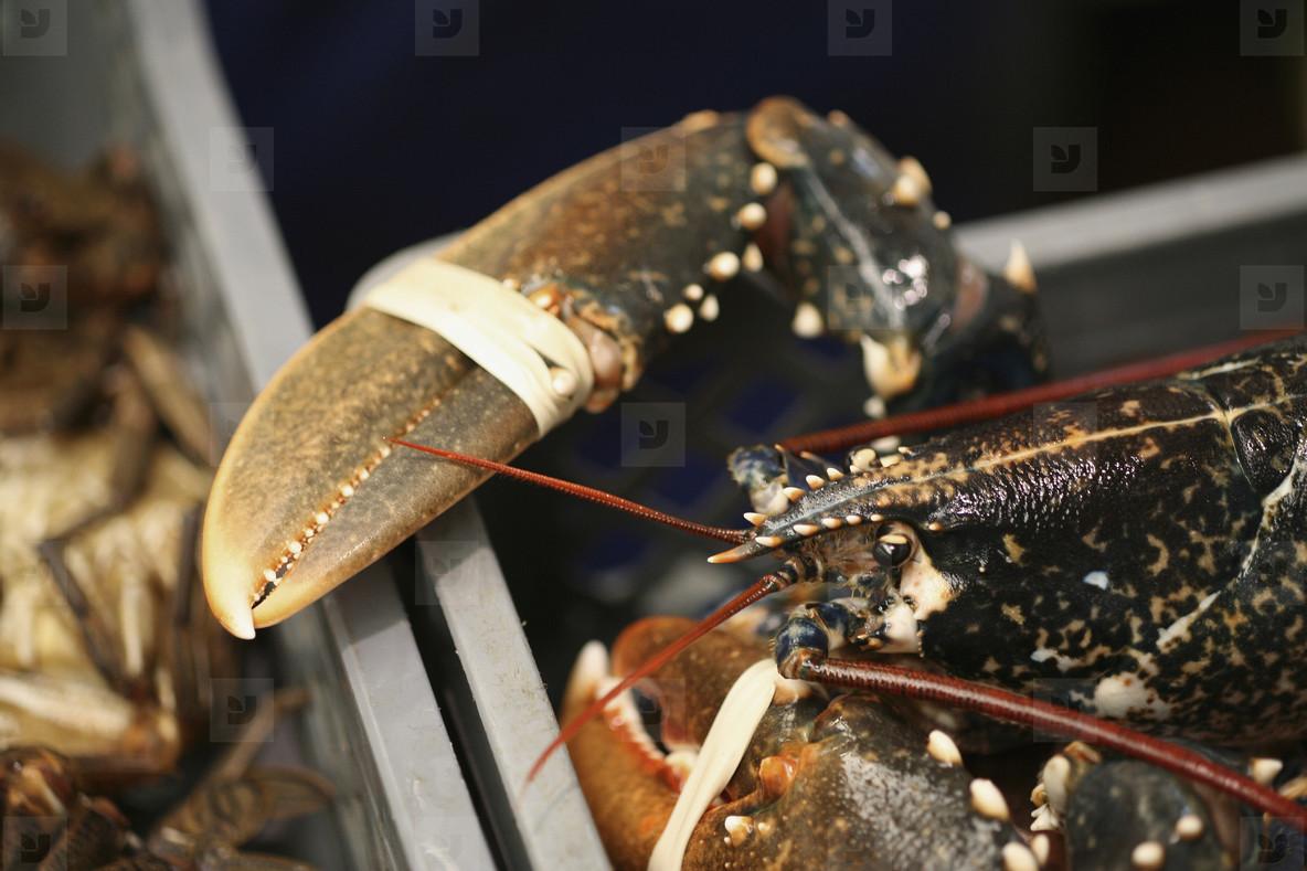 Succulent Sea Critters  24