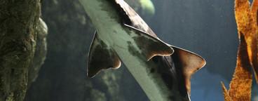 Succulent Sea Critters  26