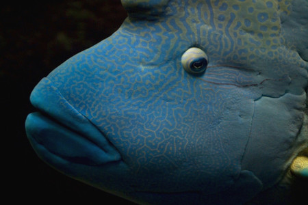 Friendly Fishy 03