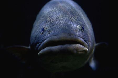 Friendly Fishy 04