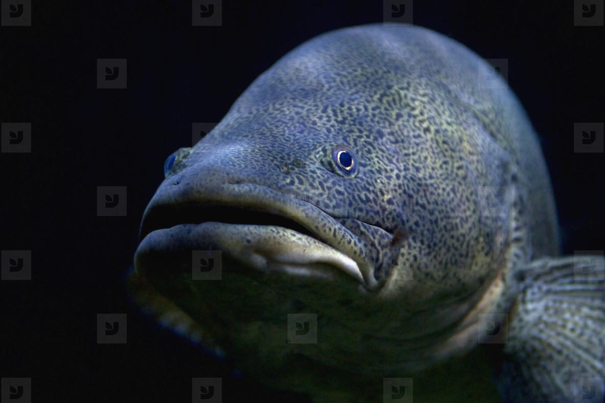 Friendly Fishy  06