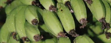 Bananas and Butterflies  01
