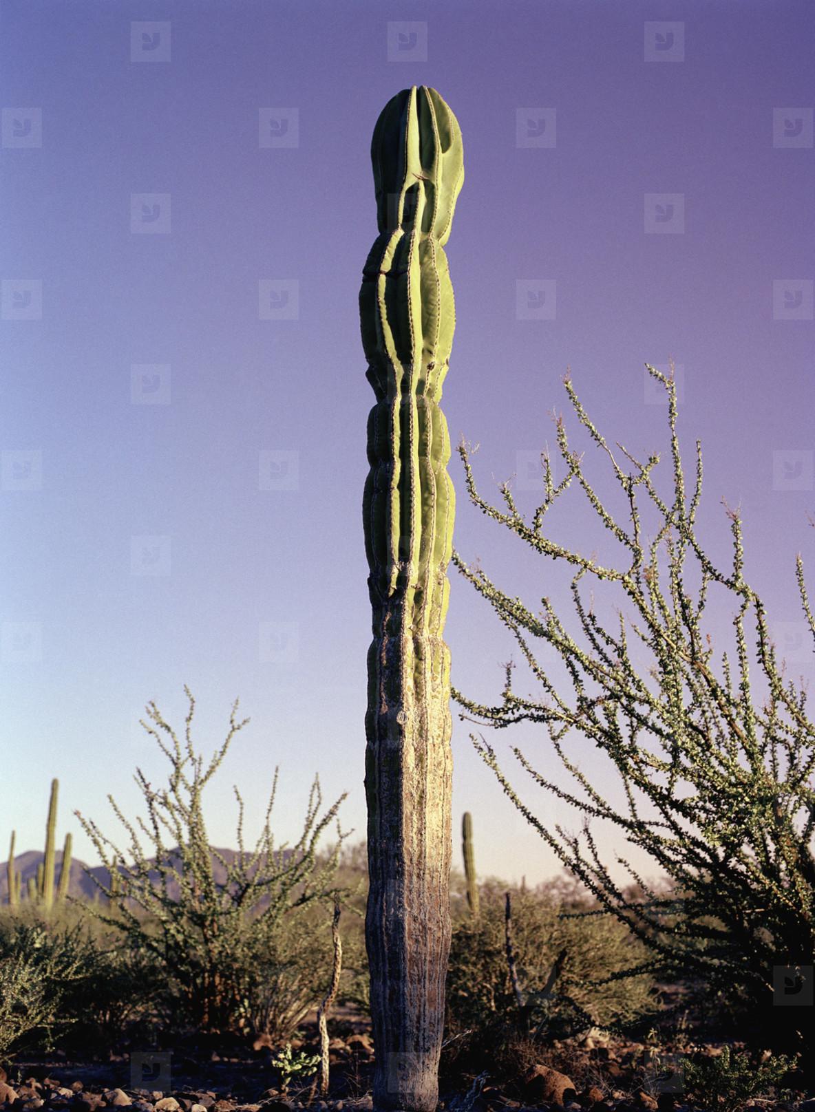 Just Deserts  08