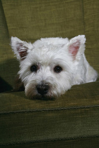Oh My Dog 05