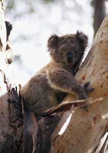 Australian Scenery 07
