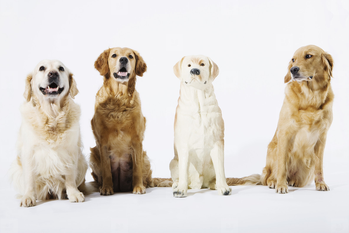 Pastoral Dogs  27