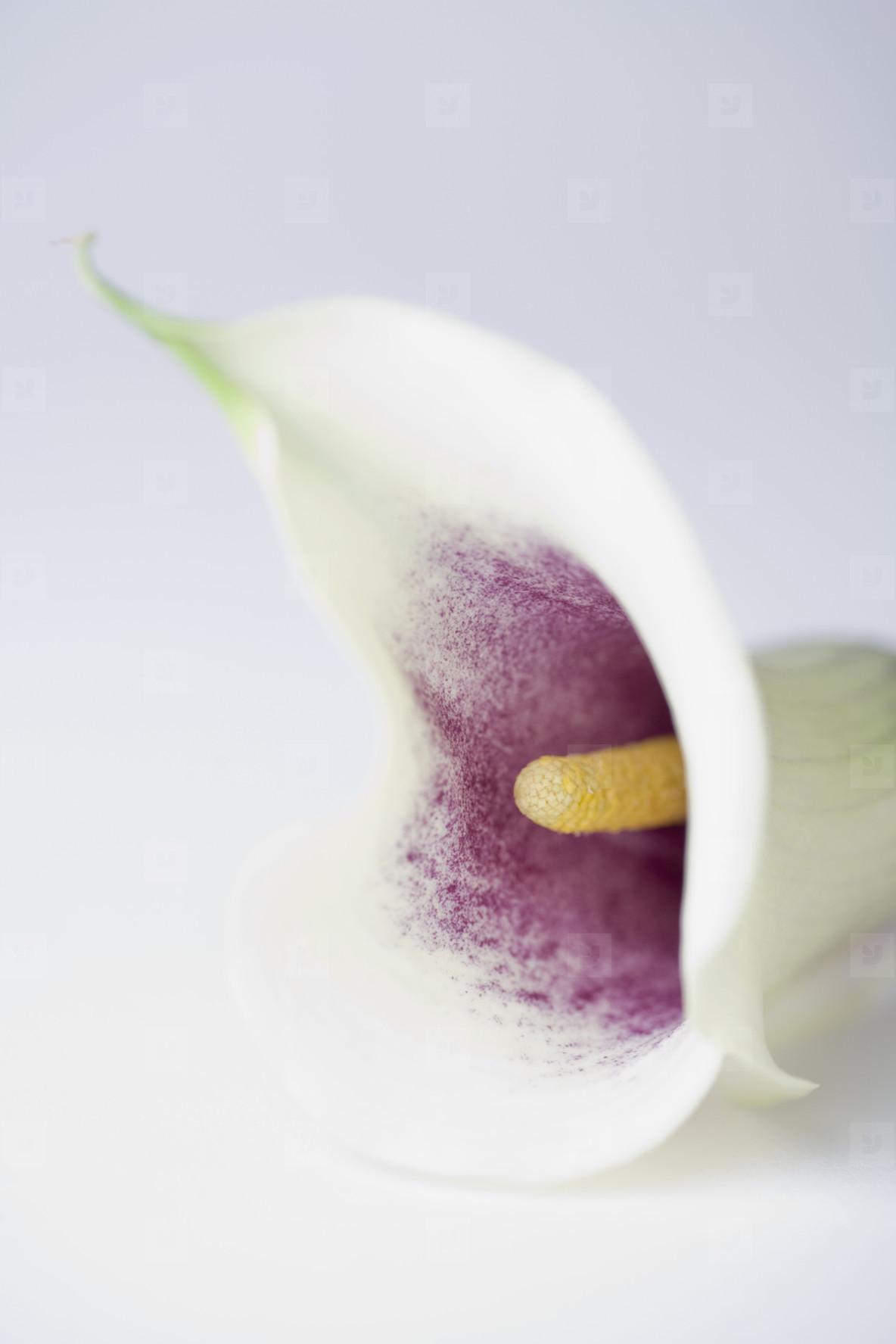 Exotic Flowers  02