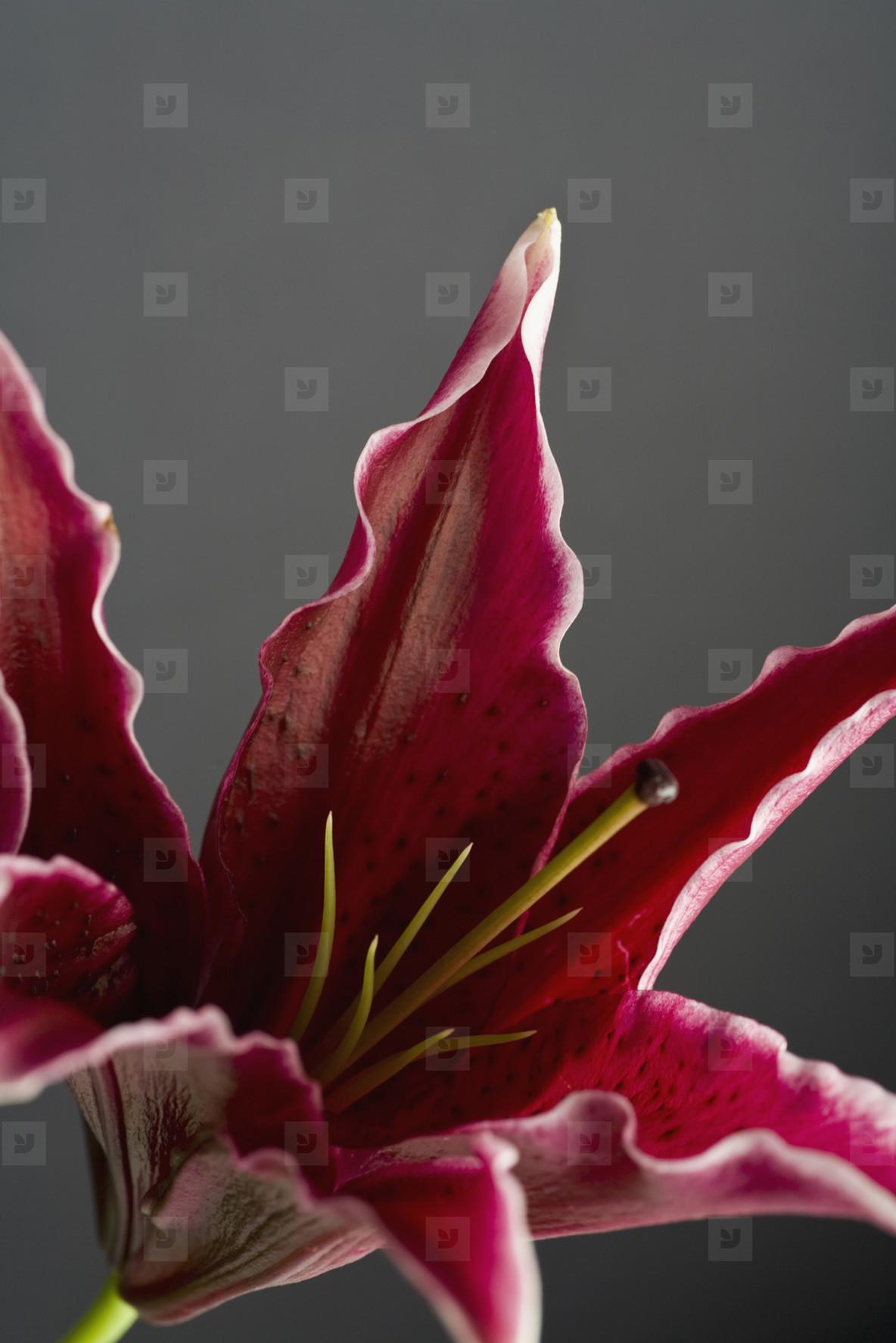 Exotic Flowers  14