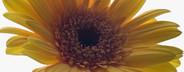 Exotic Flowers  23