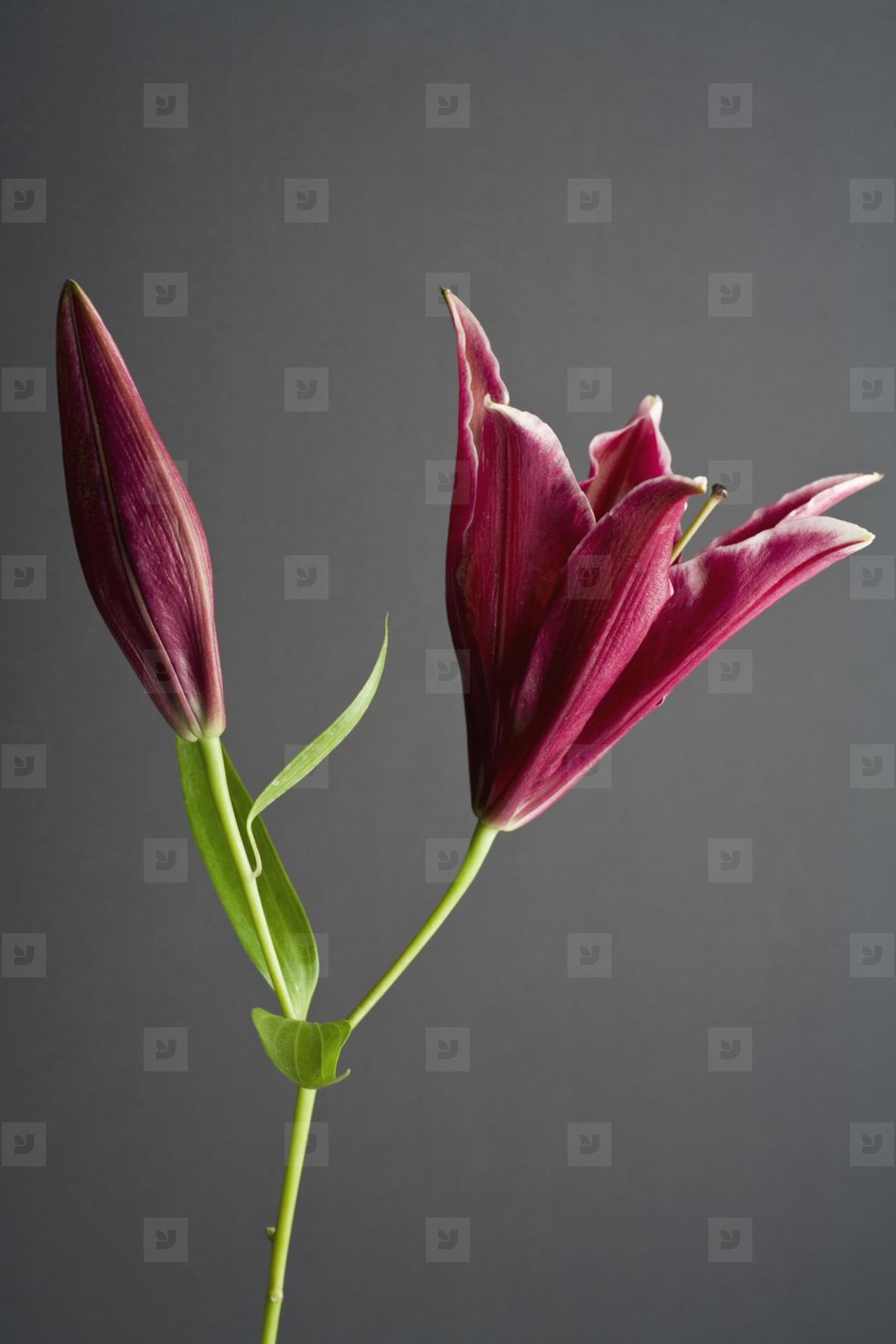 Exotic Flowers  29
