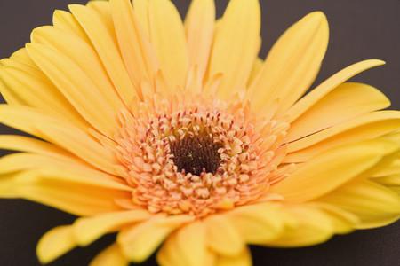 Exotic Flowers  30