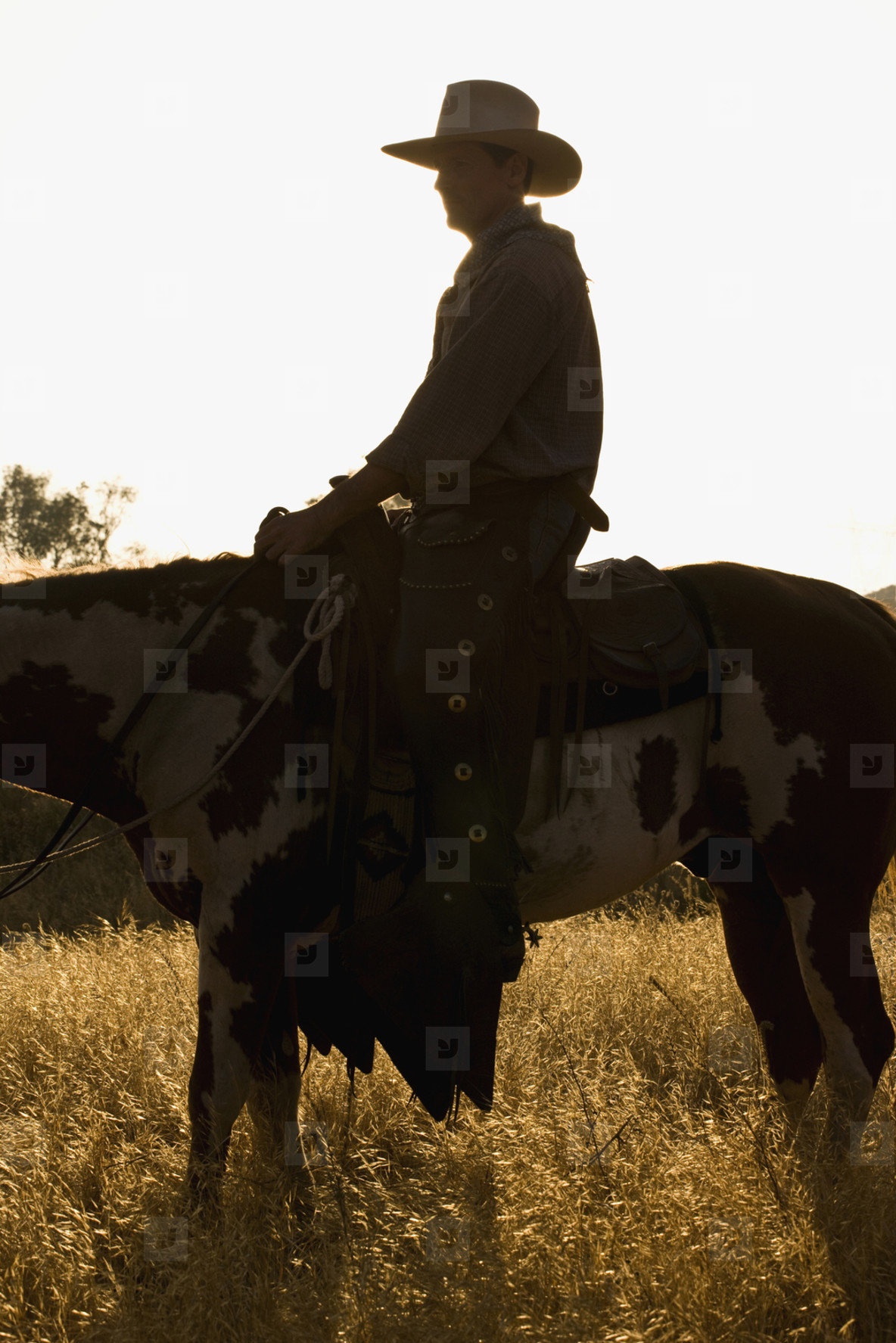 Cowboy Roundup  48
