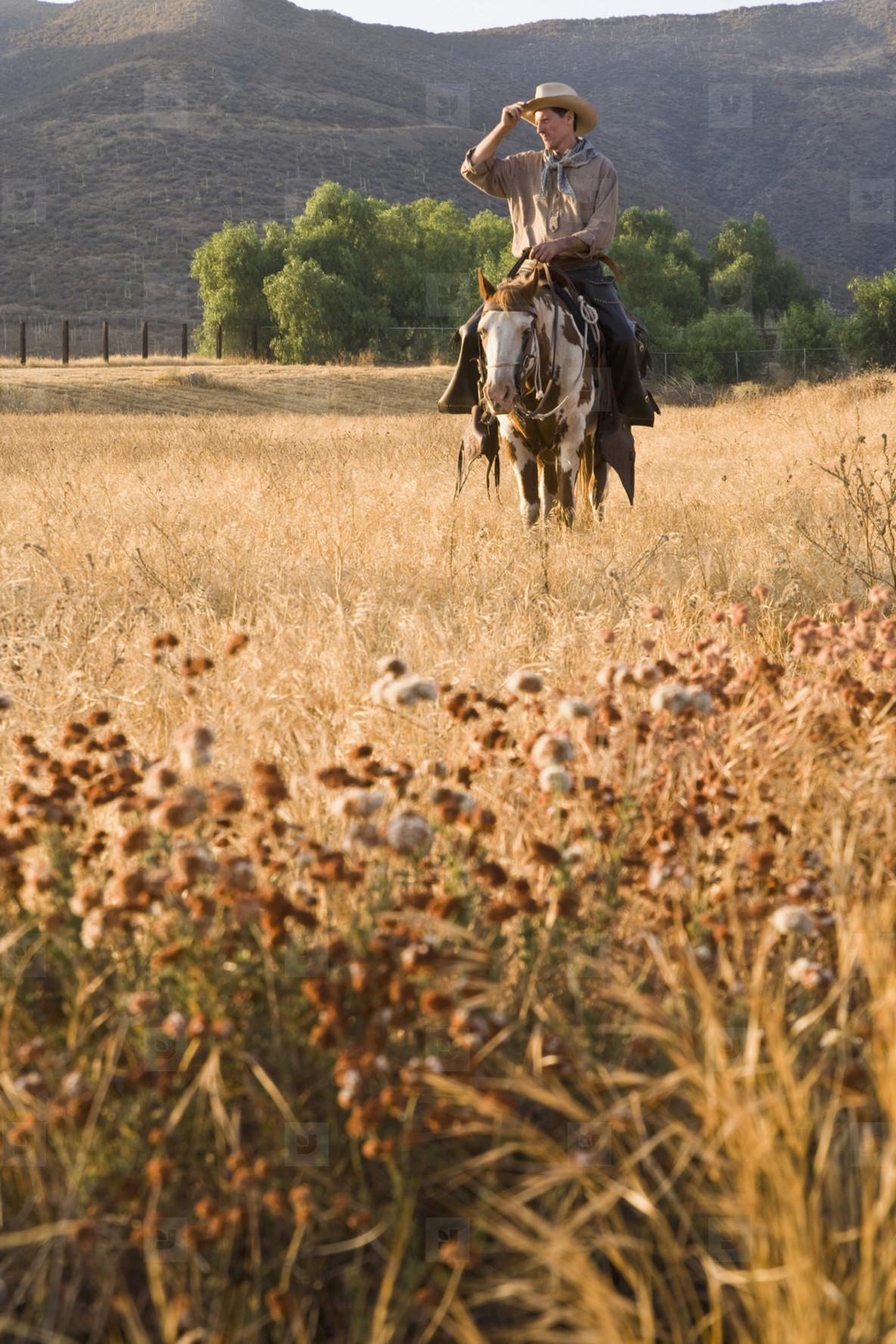 Cowboy Roundup  75