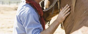 Cowboy Roundup  79