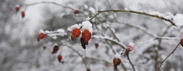 Winter Wonderland  06