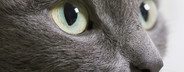 Bright eyed   Bushy tailed  16